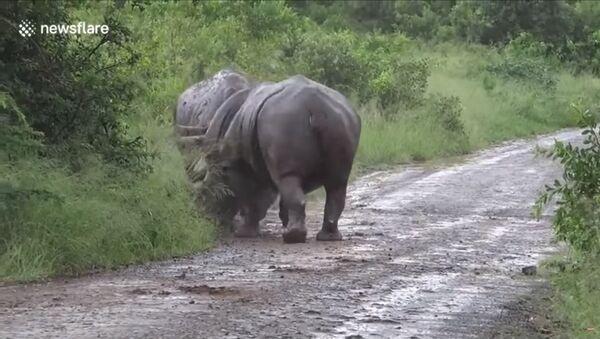 Borba nosoroga - Sputnik Srbija