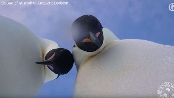 Selfi pingvina - Sputnik Srbija