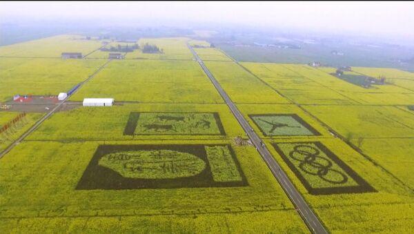Ovako kineski ratari slikaju na svojim poljima - Sputnik Srbija