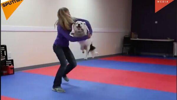 Pas plesač - Sputnik Srbija