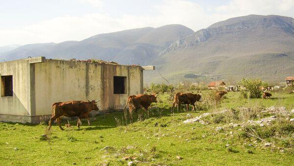 Краве поред разрушене куће код Призрена  - Sputnik Србија