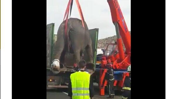 Slonovi izazvali haos na auto-putu u Španiji - Sputnik Srbija