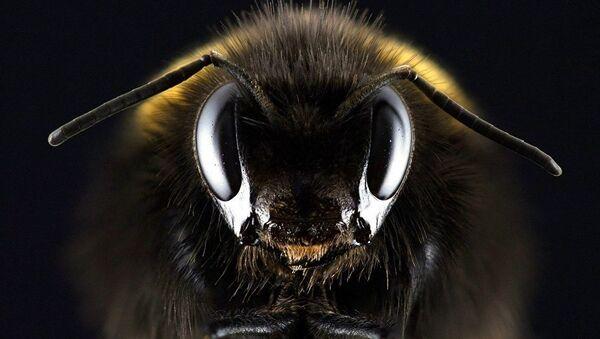 Pčela - Sputnik Srbija