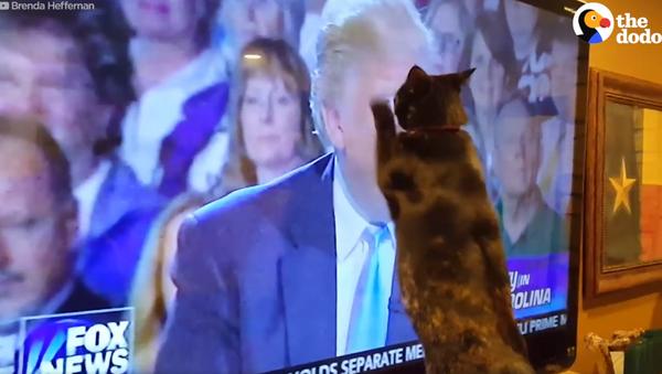 Mačke koje mrze Trampa - Sputnik Srbija