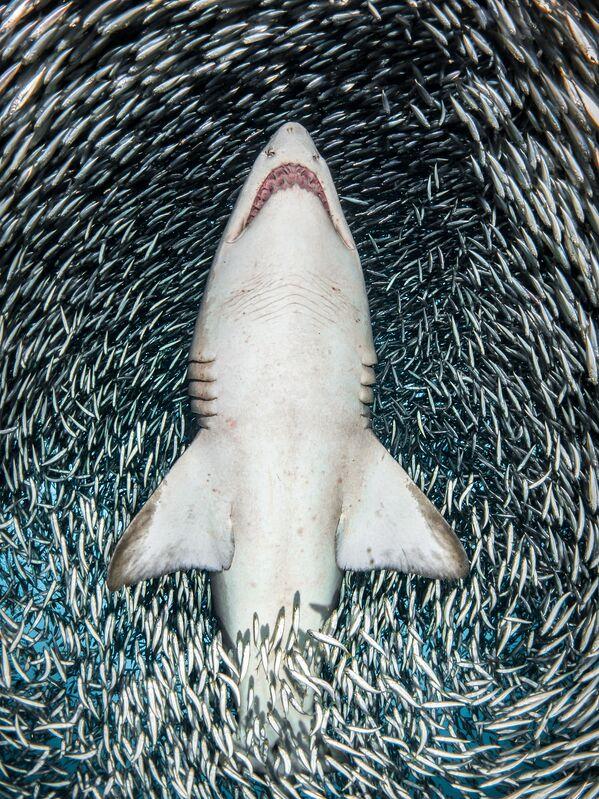 Udahnite duboko i zaronite – najbolje podvodne fotografije u 2018. - Sputnik Srbija