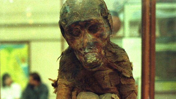 Скелет мајмуна из египатске гробнице - Sputnik Србија