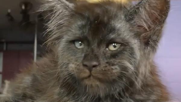Мачка са људским ликом - Sputnik Србија