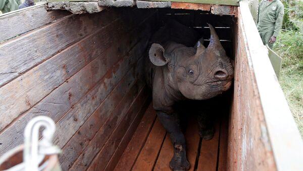 Crni nosorog - Sputnik Srbija