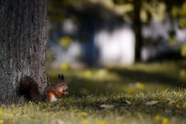 Veverica u parku Caricino u Moskvi - Sputnik Srbija