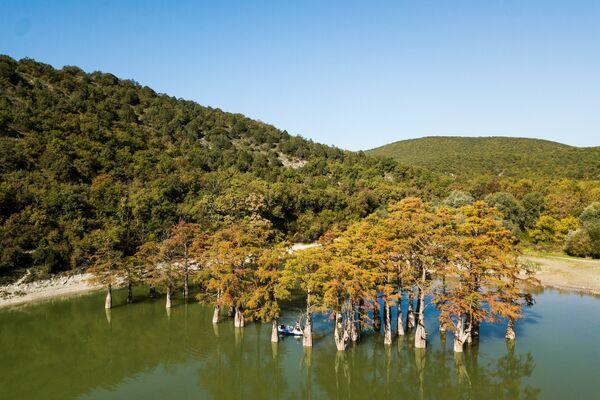 Močvarni čempresi na jezeru Suku (Kiparisovo jezero) u Krasnodarskom kraju - Sputnik Srbija