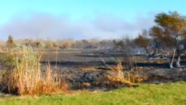 Požar, Carska Bara - Sputnik Srbija