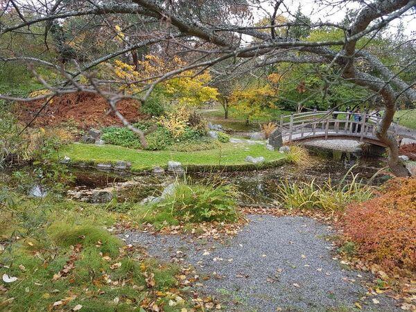 Botanička bašta na severu Stokholma. - Sputnik Srbija