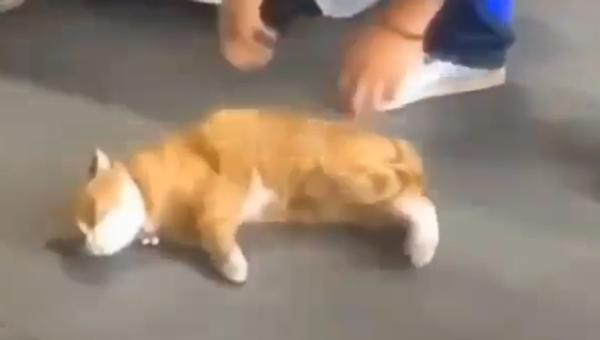 Лења мачка - Sputnik Србија