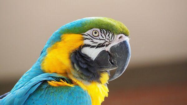 Prelepi makao, jedan od simbola Amazonije - Sputnik Srbija