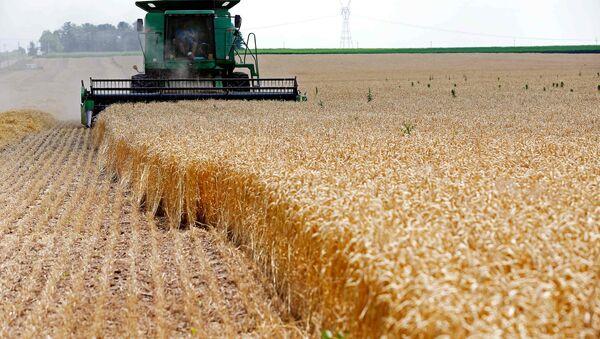 Kombajn žanje žito na njivi u Diksonu, u američkoj državi Ilinois - Sputnik Srbija