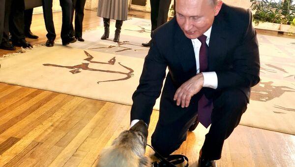 Putin sa štenetom koje mu je poklonio srpski predsednik - Sputnik Srbija