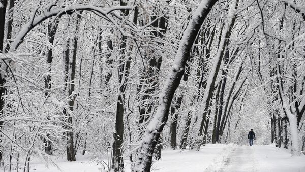 Снег у Београду - Sputnik Србија