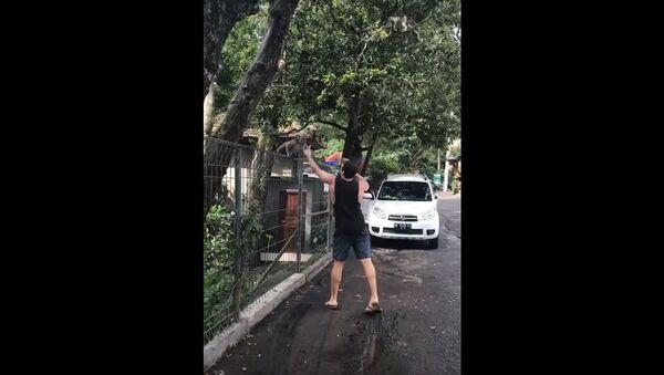Turista i majmun lopov na Baliju. - Sputnik Srbija