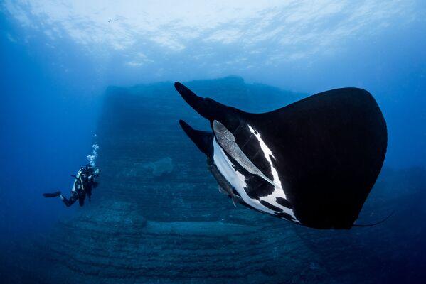 Зароните у бездан: Најбоље подводне фотографије - Sputnik Србија