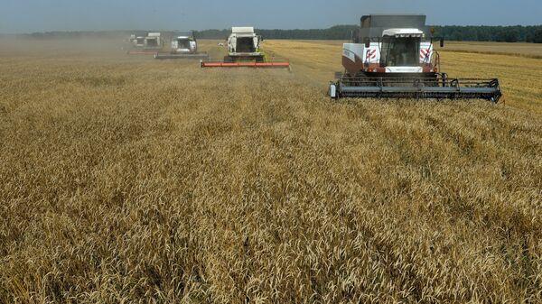 Жетва озиме пшенице на имању у Новосибирској области - Sputnik Србија