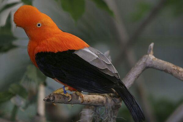 Истражите егзотичне птице незамисливе лепоте - Sputnik Србија