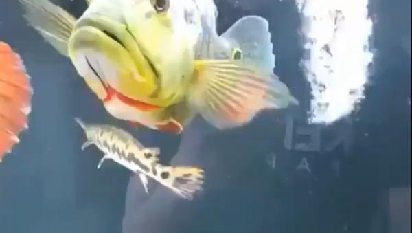Рибица са Твитера - Sputnik Србија
