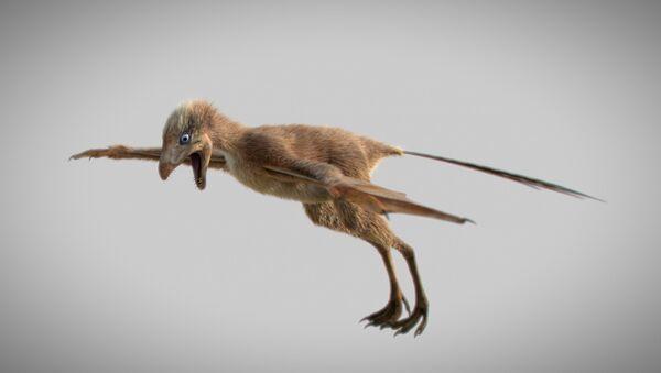 Rekonstrukcija dinosaurusa sa krilima iz perioda Jure Ambopteryx longibrachium kineske Akademije nauka u Pekingu - Sputnik Srbija