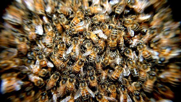 Pčele - Sputnik Srbija