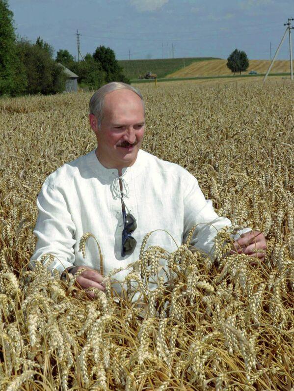 Aleksandar Lukašenko obilazi polja pšenice kod Grodna 2005. godine - Sputnik Srbija
