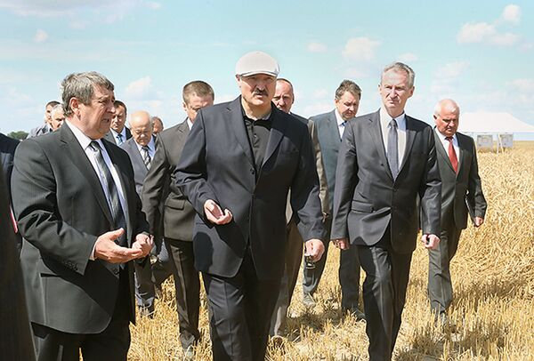 Aleksandar Lukašenko na polju ozime pšenice. - Sputnik Srbija