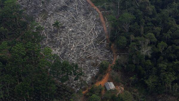 Сеча шума у Амазону - Sputnik Србија