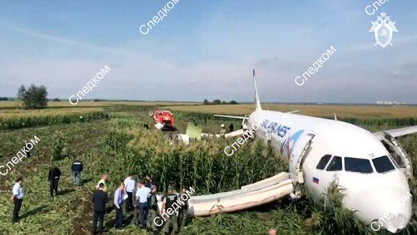 Припадници Истражног комитета Русије поред авиона А-321 компаније Урал ерлајнс који је принудно слетео у Подмосковљу - Sputnik Србија
