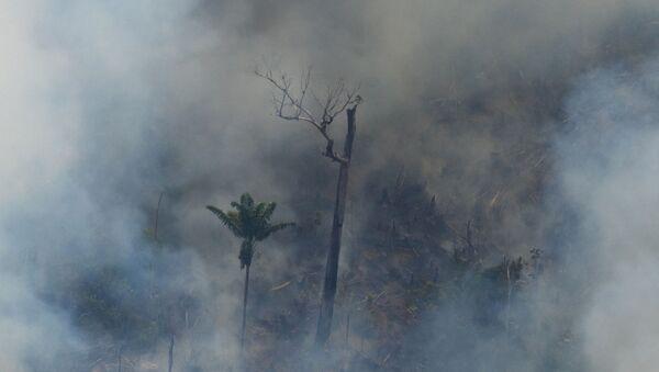 Požari u Amazoniji - Sputnik Srbija
