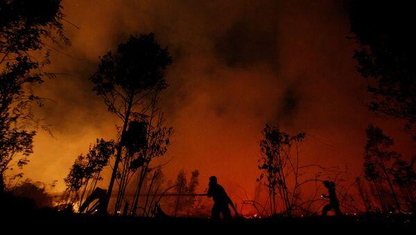 Vatrogasci gase šumski požar u Nacionalnom parku Sebangau i Indoneziji - Sputnik Srbija