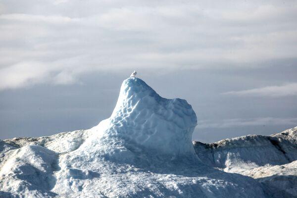 Птица на леденом брегу у водама острва Гренланда. - Sputnik Србија
