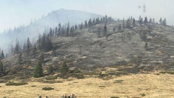 Posledice požara na Staroj planini - Sputnik Srbija