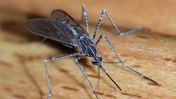 Komarci sve otporniji na otrove... - Sputnik Srbija