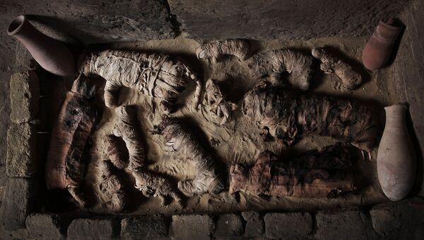 Мумифициране мачке у гробници на древној некрополи у близини познатих египатских пирамида у Сакари - Sputnik Србија
