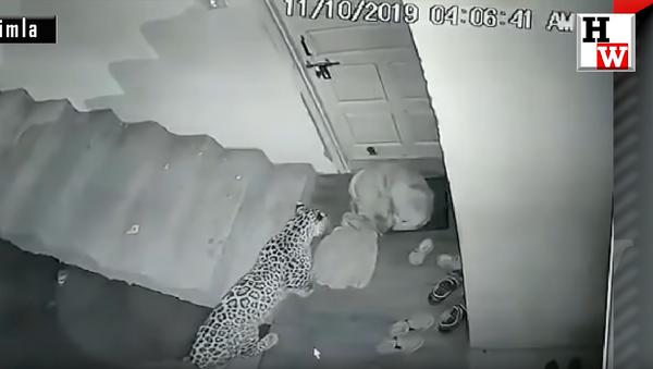 Леопард напао пас - Sputnik Србија