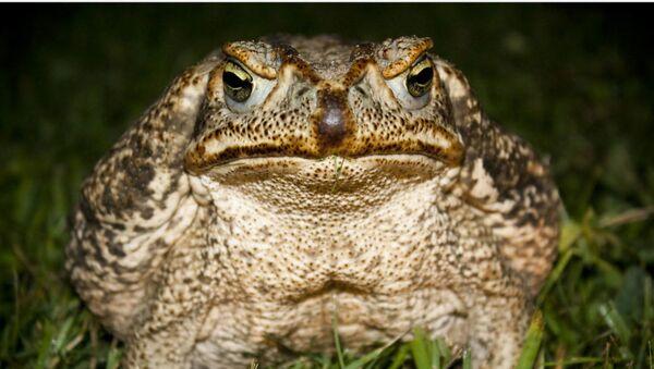 Отровна жаба - Sputnik Србија
