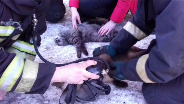Vatrogasci reanimiraju mačku spasenu iz požara  - Sputnik Srbija