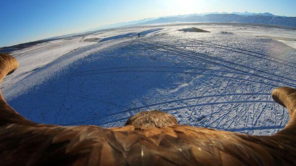 Slika snimljena tokom snimanja kamerom koja se nalazi na leđima ptice. - Sputnik Srbija