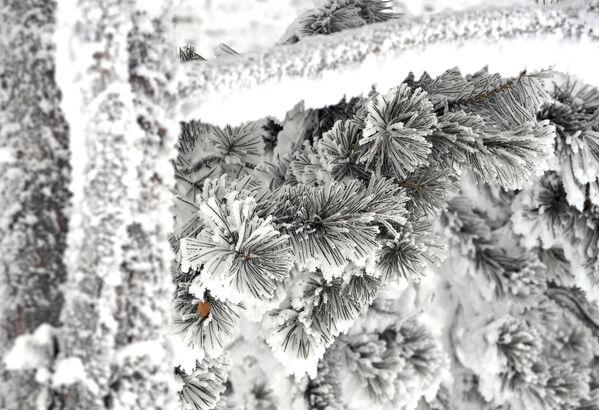 Zimski pejzaž na obali reke Jenisej. - Sputnik Srbija