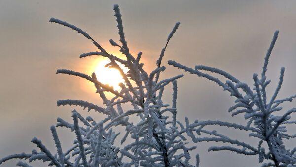 Inje na drveću u zimsko jutro u predgrađu Novog Sada - Sputnik Srbija