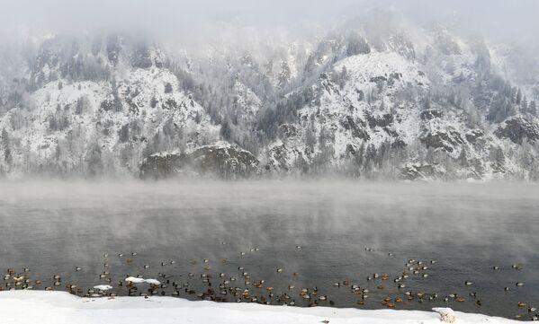 Дивље патке на реци Јенисеј у граду Дивногорску - Sputnik Србија