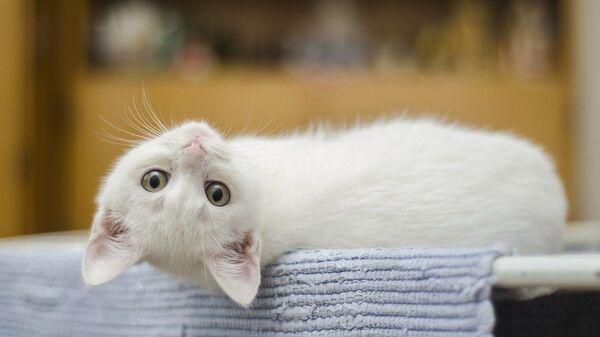 Bela mačka - Sputnik Srbija