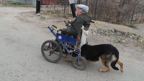 Пас који је хуманији од људи - Sputnik Србија