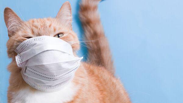 Mačka sa medicinskom zaštitnom maskom - Sputnik Srbija