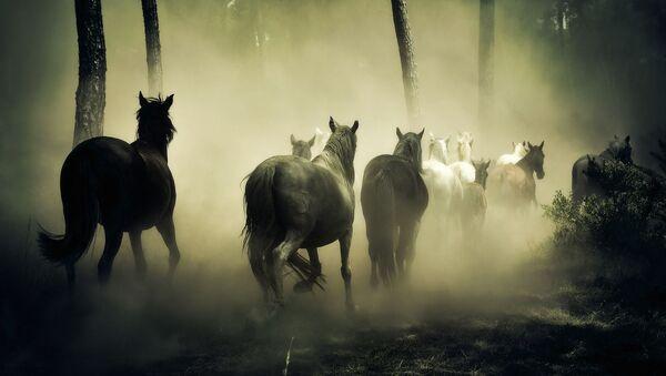 Крдо коња у шуми  - Sputnik Србија