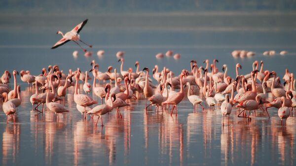 Flamingosi - Sputnik Srbija